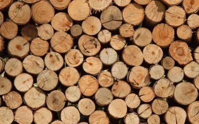 Quelles différences entre bois massif, aggloméré et contreplaqué ?