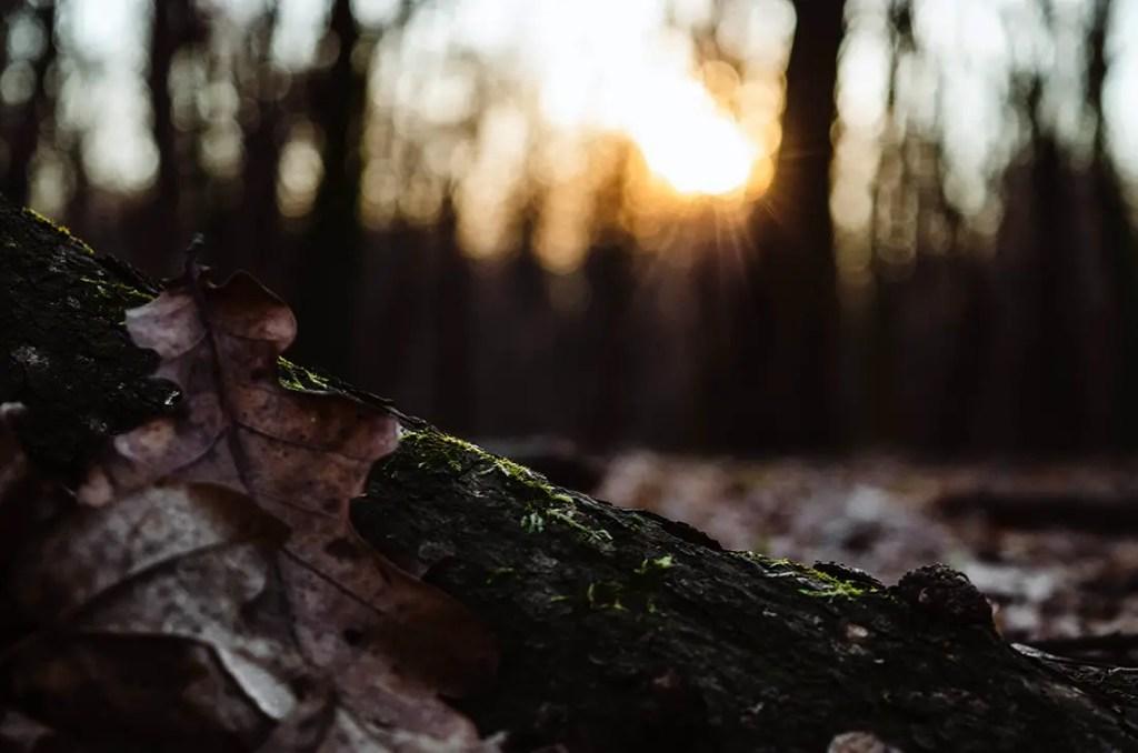 gros plan sur un grume de bois