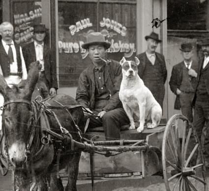 In front of a saloon in Georgetown, Colorado with a Chinese man who is identified as Chan Gow and his pit bull type dog. This photo is dated 1875-1892.