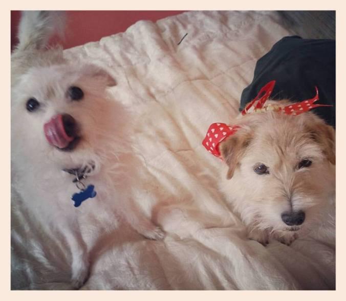 Terriers1