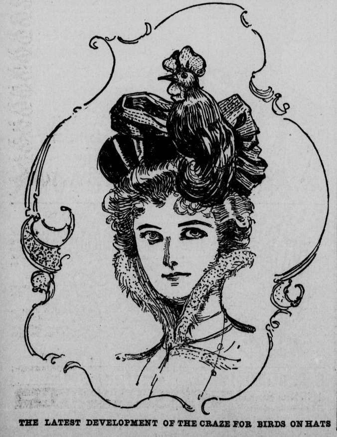 Bird Hats_Los Angeles Herald_Dec 18 1898