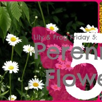 Lily & Frog Friday 5: 5 of My Favorite Perennial Flowers