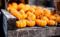 7032178-pumpkins-orange-autumn