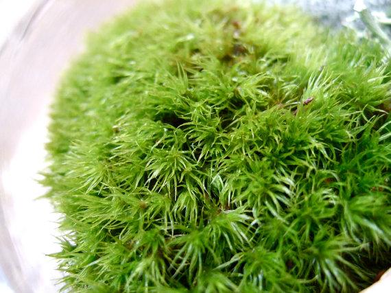 organic skin care irish moss