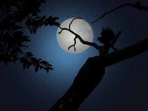 night-1629980_1920