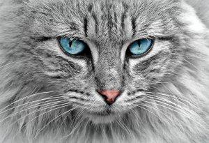 cat-1045782_1920