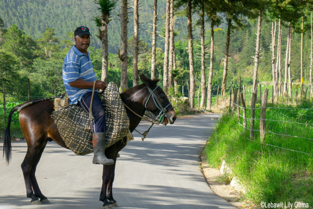 Countryside man on horse in Manabao Dominican Republic.