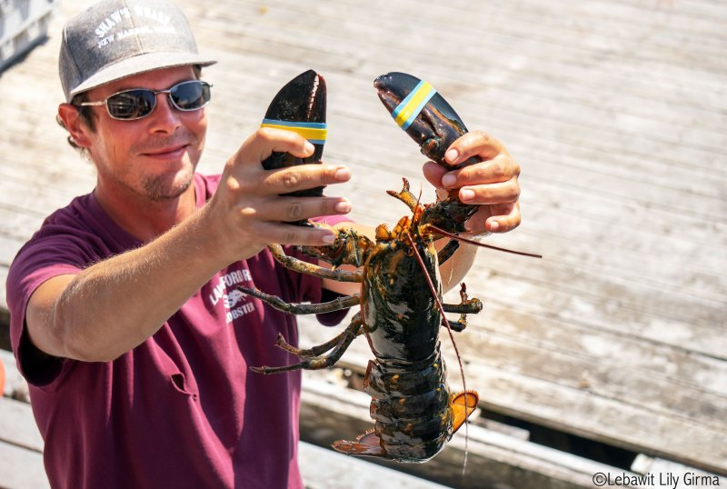 maine lobster and fisherman