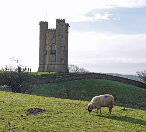 sheep and towerlow res