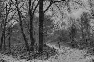 Landscape(12)
