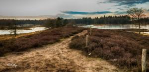 Landscape(13)