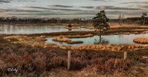 Landscape(14)