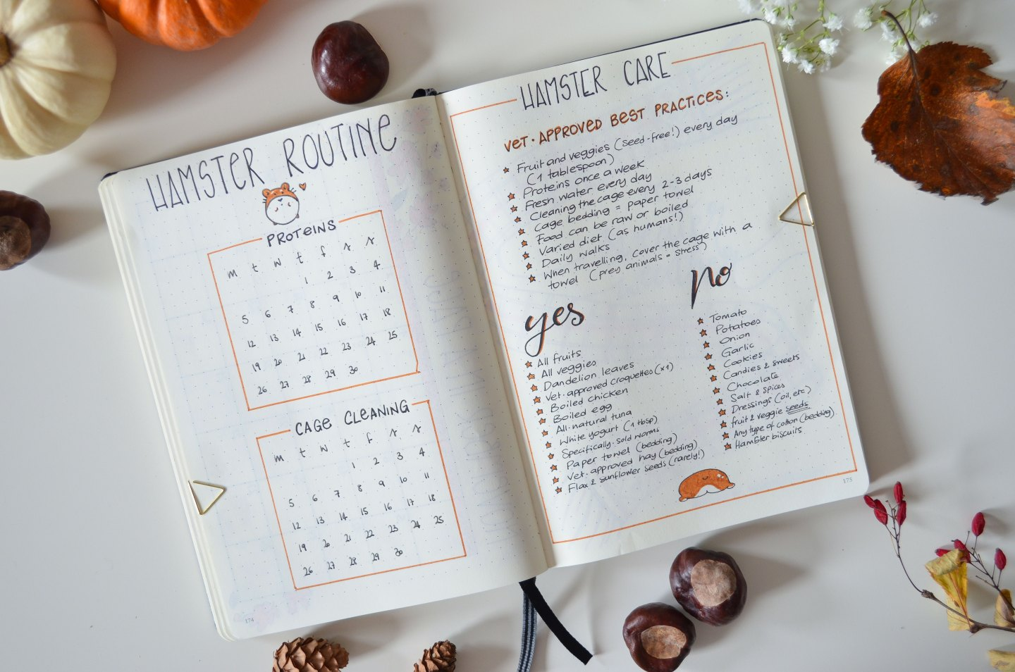 autumn inspired bullet journal november bujo