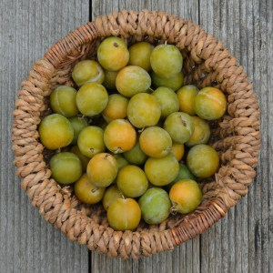 plums, basket, fruit
