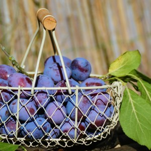 plums, fruit basket, fruit