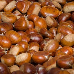 chestnuts, fall, chestnut