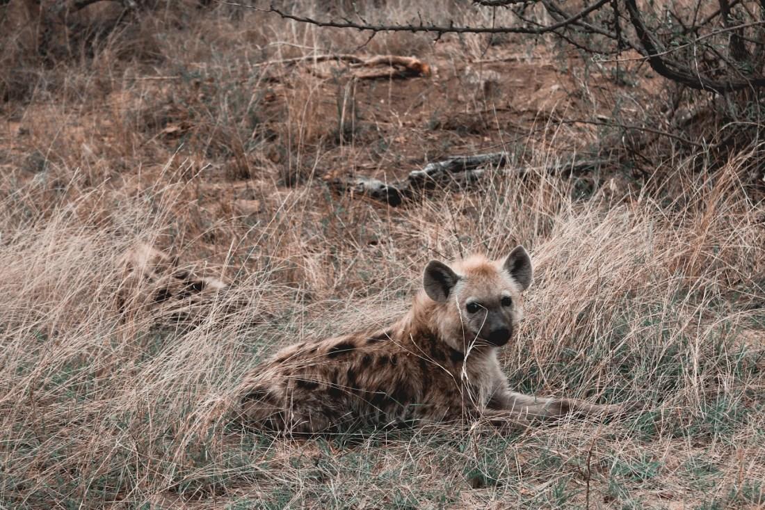 lilytoutsourire - safari au parc kruger - 3 jours dans le bush (15)
