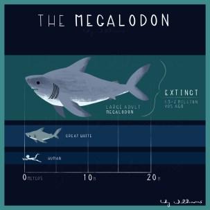 Megalodon_3adult_lilywilliams