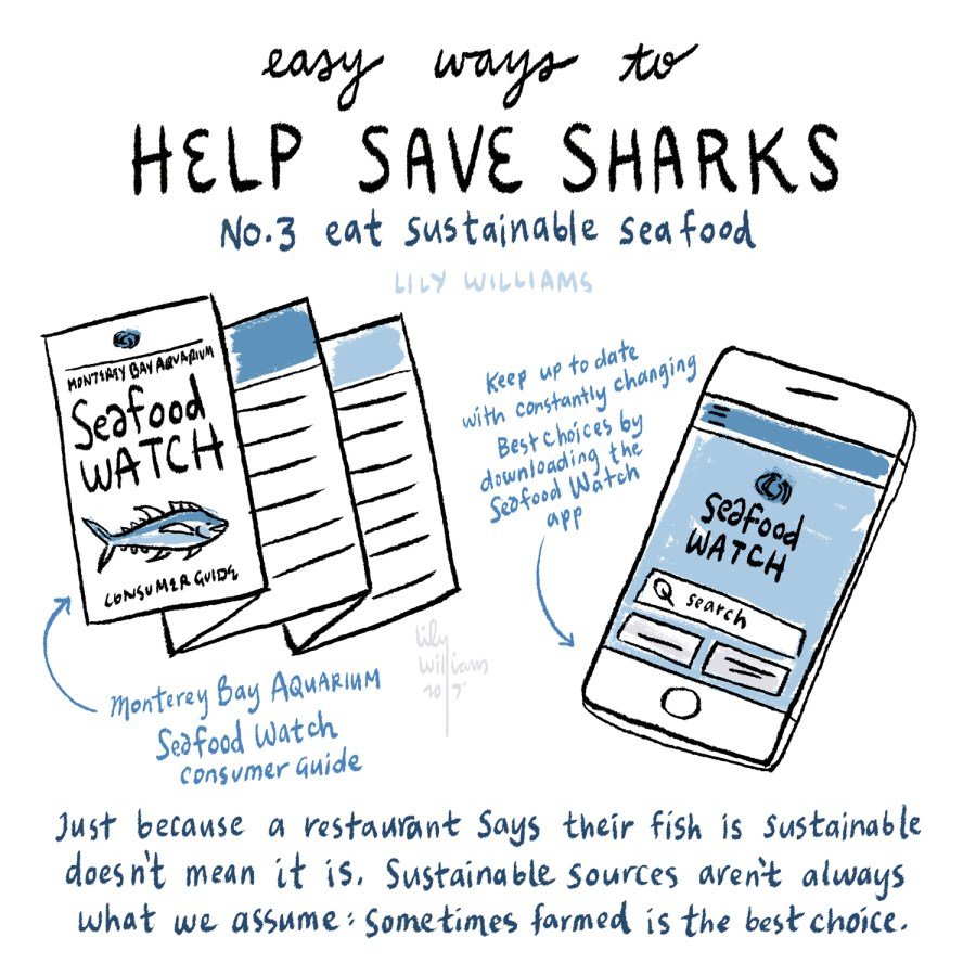 SharkWeek2017_5003