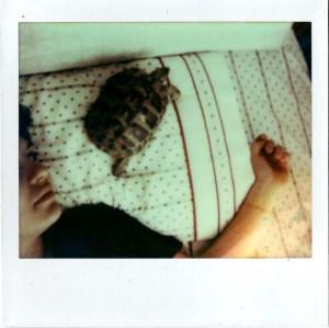 Awaken By A Turtle 2013
