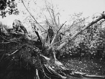 Cutten Tree