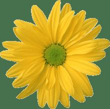 Cum Se Citesc Culorile In Engleză In Rusă Nume De Flori In Engleză Pentru Copii Culori Primare In Engleză