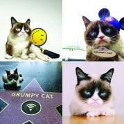 realgrumpycat