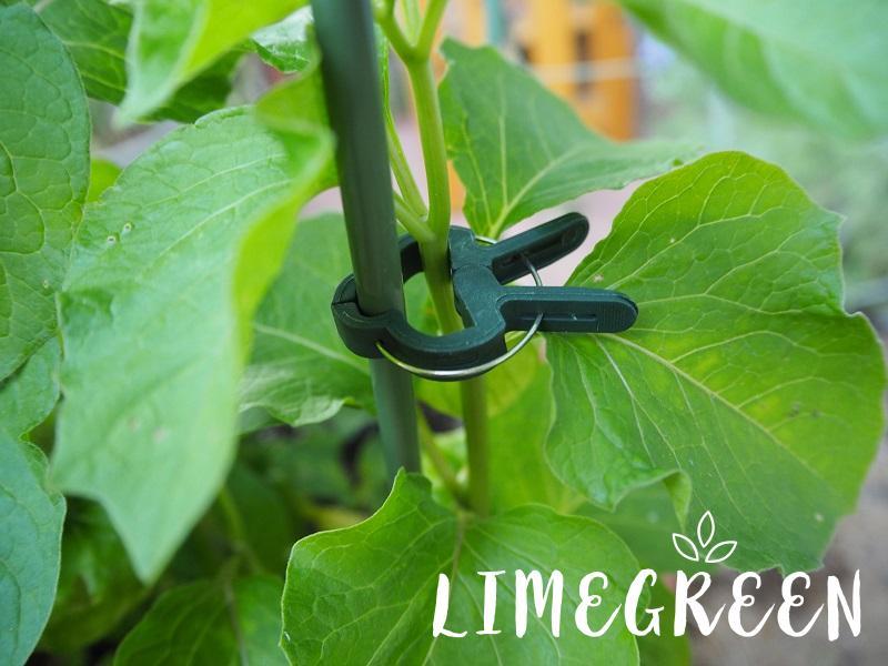 ダイソーのガーデニングクリップと園芸ツル巻き用リング支柱