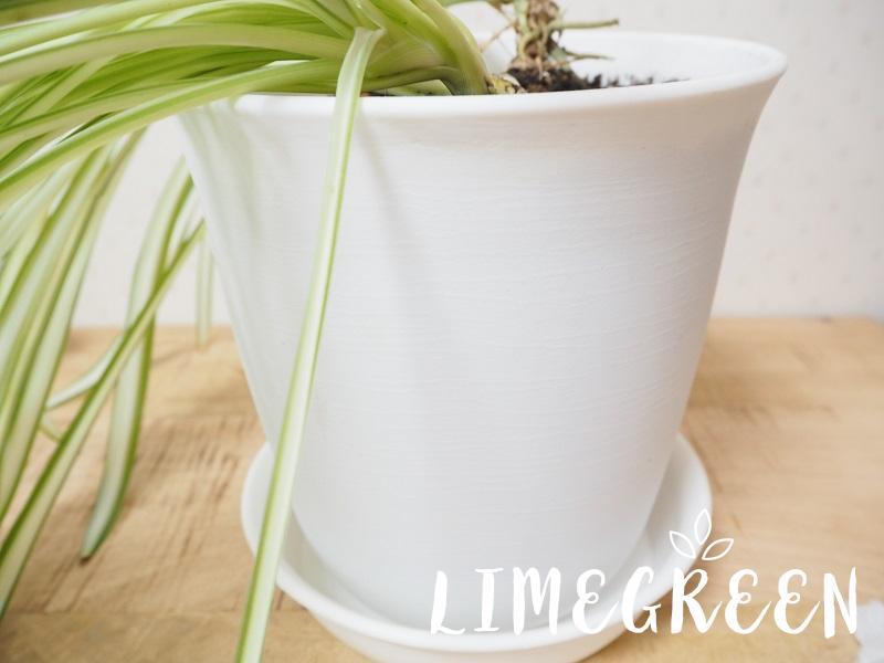 ダイソーの植木鉢