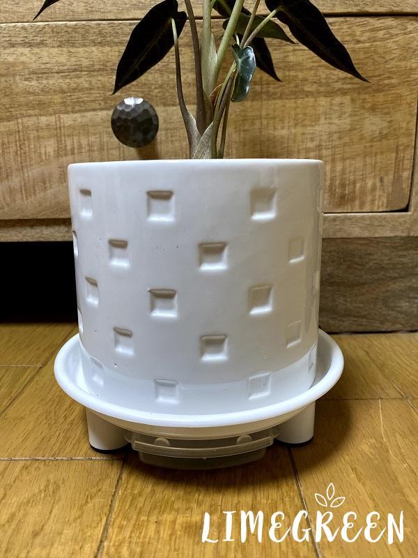 ダイソーの白い陶器鉢