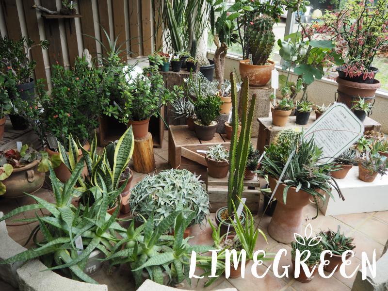 千葉市都市緑化植物園の温室