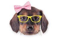 puppy-head-sm
