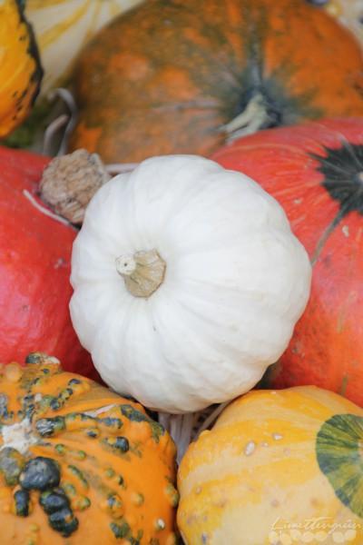 Herbstdeko und Kürbisliebe