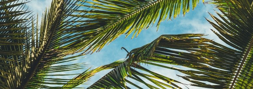 Palm tree branches - 'What to do when you arrive at Marah