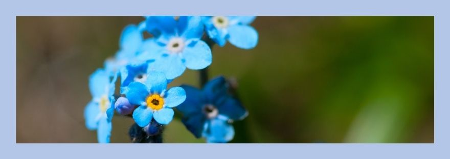 Forget-me-not flowers to remind us of God as Jehovah Jireh