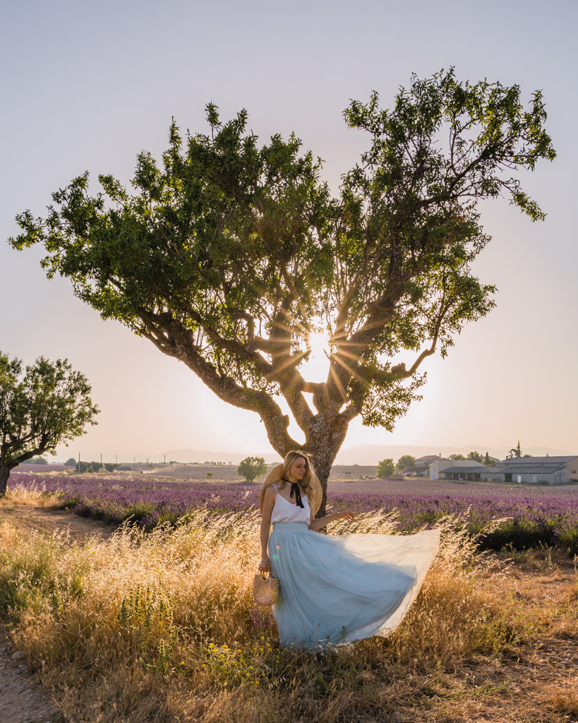 Heart-shaped tree in lavender fields in Provence, France