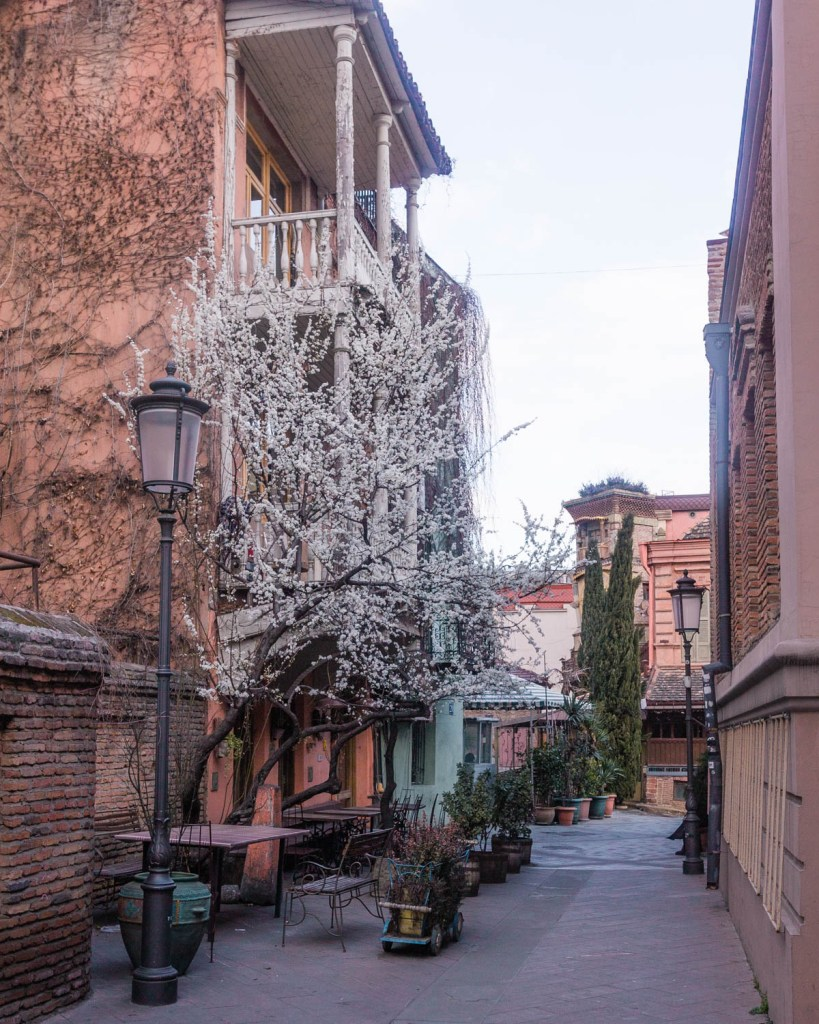 Blooming tree in the Old Town of Tbilisi - Georgia