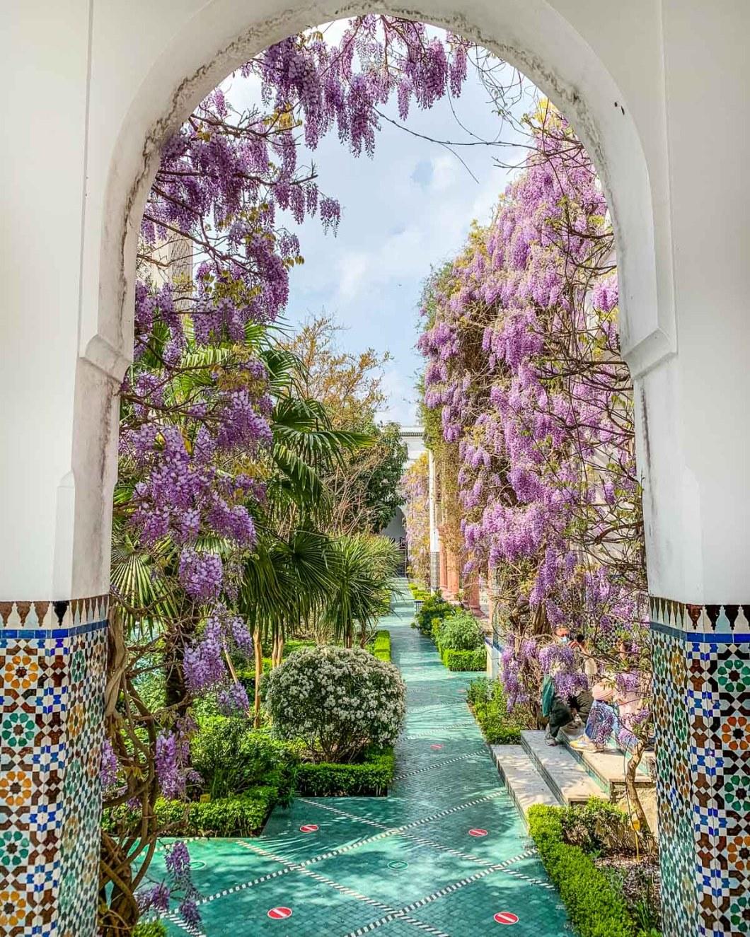 Wisteria in bloom in the garden of the Grande Mosquée de Paris