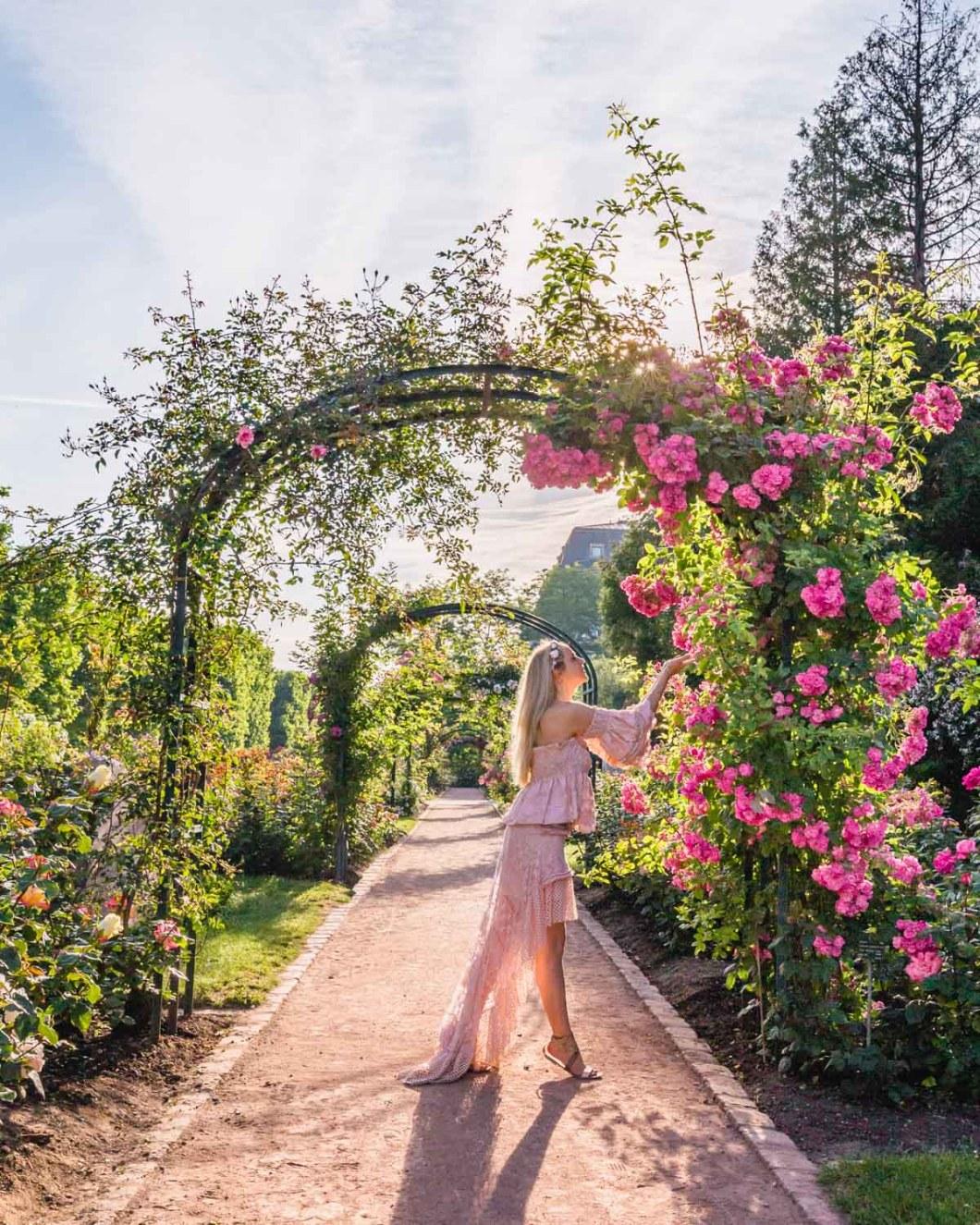 Roses in the Jardin des Plantes - Paris
