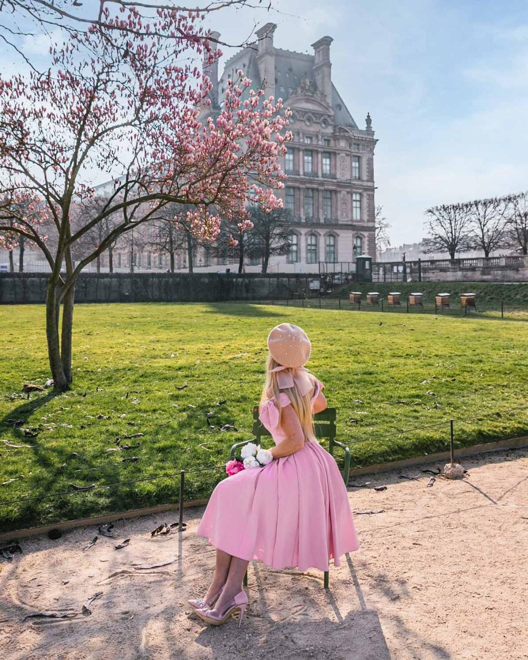 Magnolias in bloom in the Tuileries garden - Paris