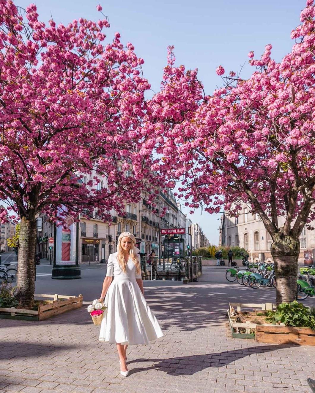 Cherry blossoms in Place Camille Claudel, metro station Falguière - Paris