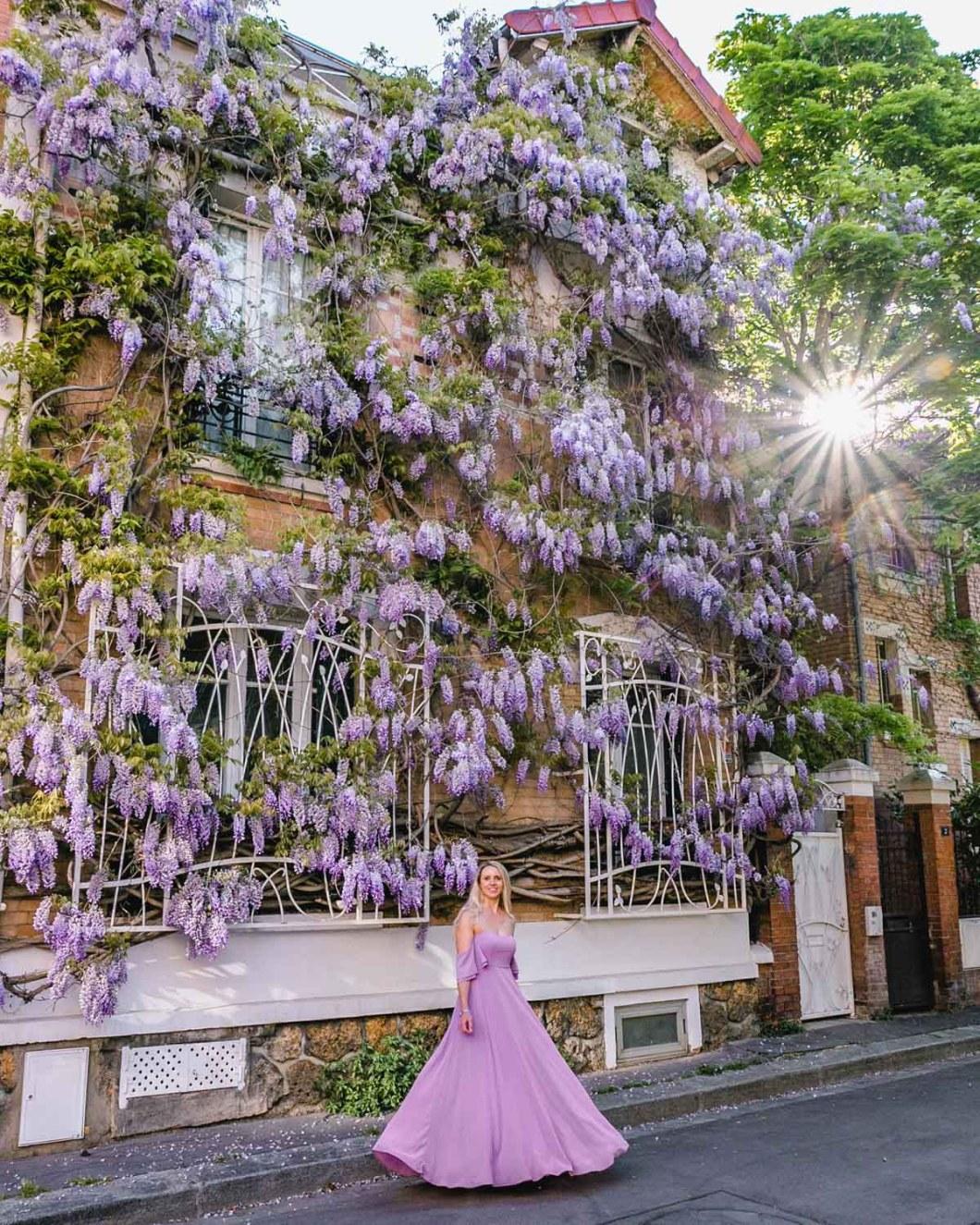 Wisteria in bloom in the Cité Florale - Paris
