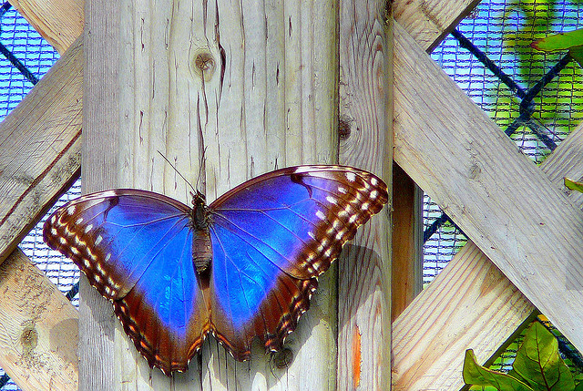 THE BUTTERFLY EFFECT: HOW SMALL CHANGES LEAD TO BIG PROGRESS