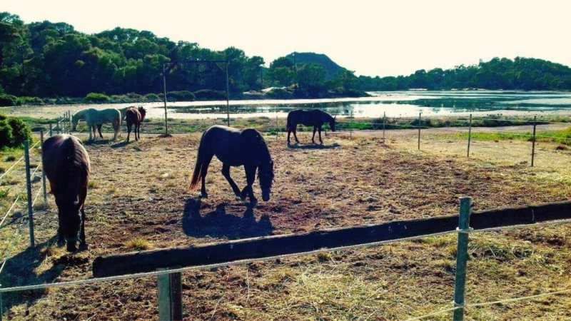 Aponisos Horse Riding 1024x576 800x450 - THE ULTIMATE GUIDE IN AGISTRI: THE TOP 16 THINGS  TO DO AND SEE