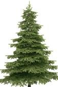 Kerstboom kaal