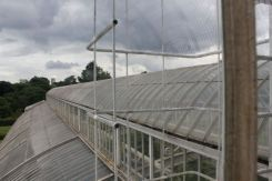 Palm House From The Top