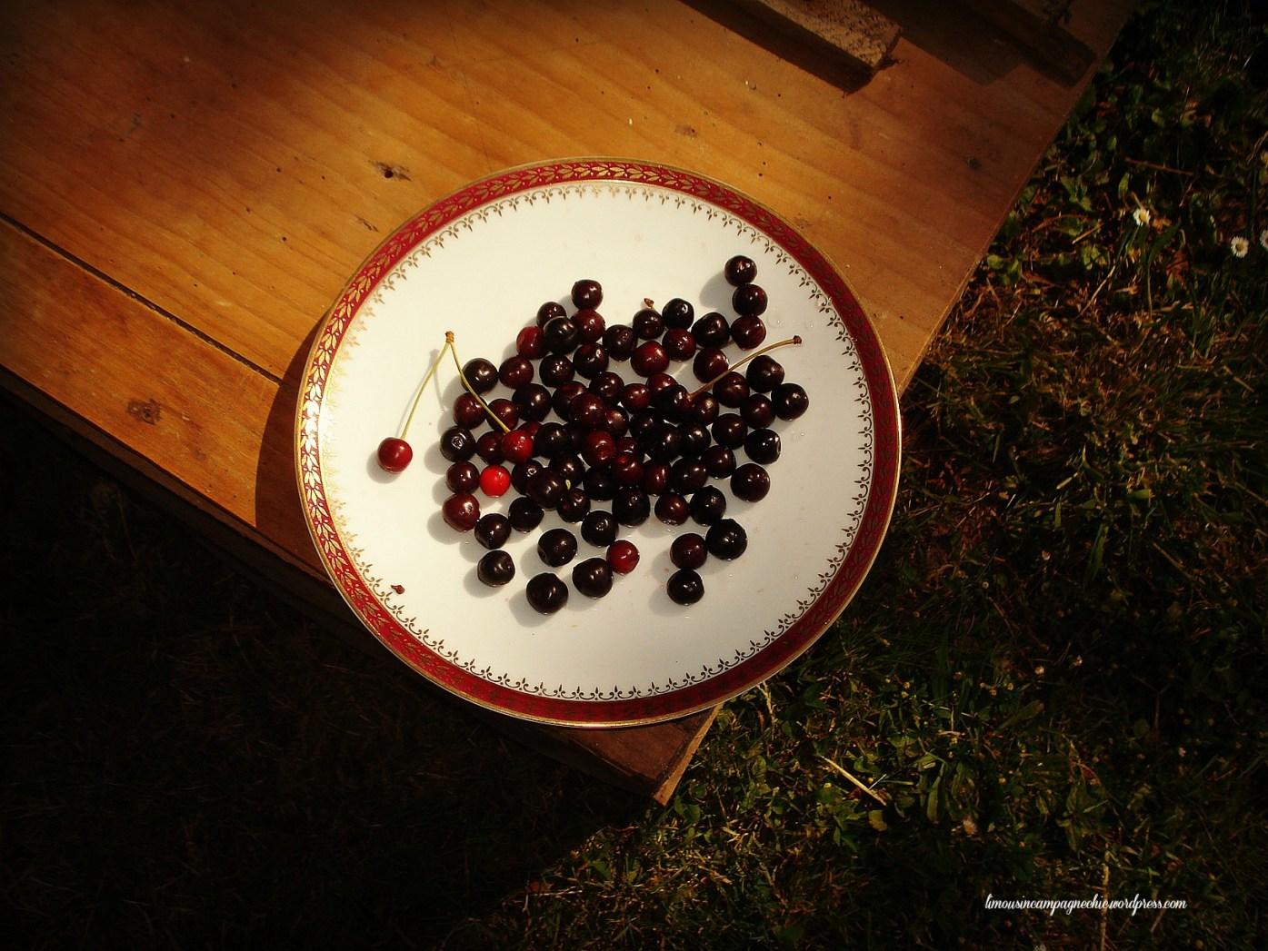 Cerise noires du Limousin