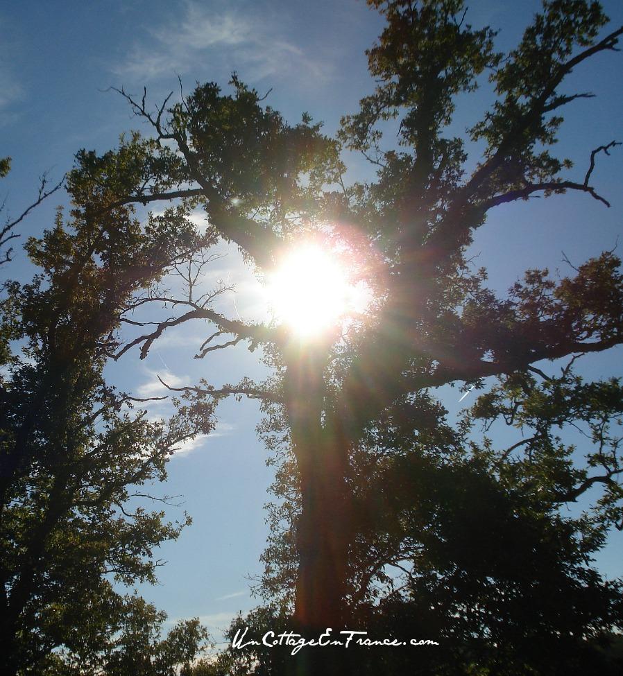 L'arbre,aux fees - Un Cottage En France