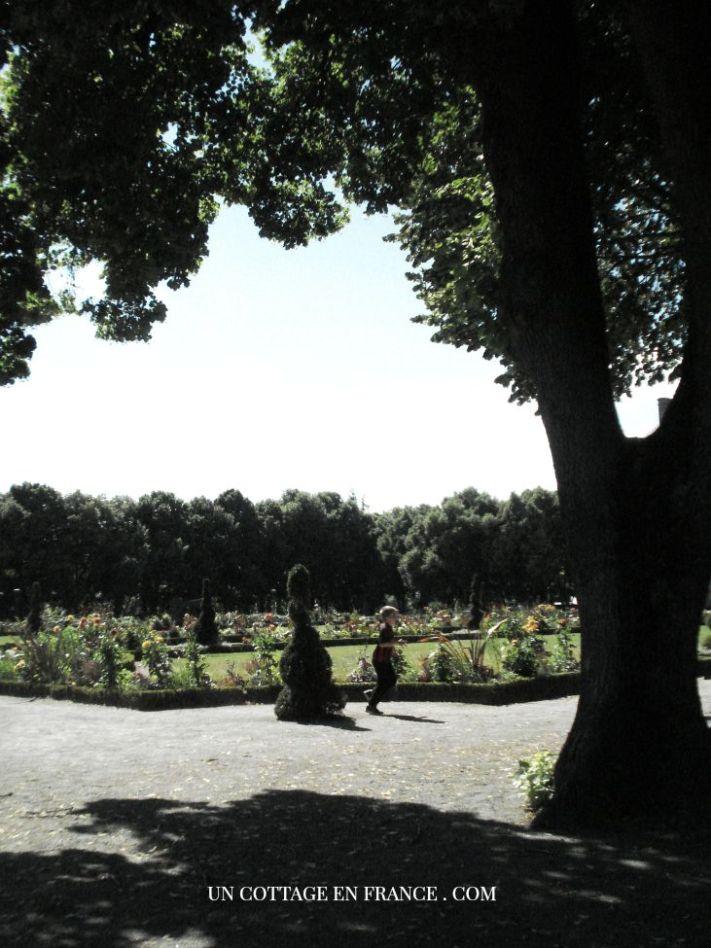 Jardin de l'Eveche de Limoges dahlias 2015