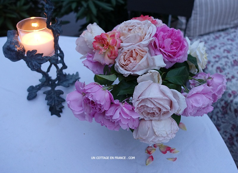 blog roses de jardin cottage